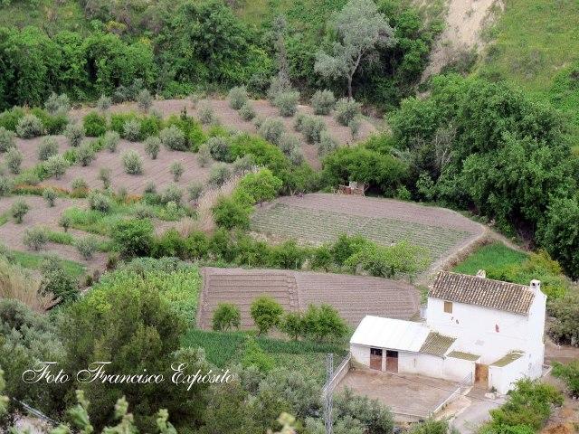 El campo de Baena